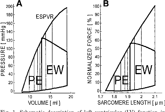 Figure 1 From Regulation Of Energy Consumption In Cardiac Muscle