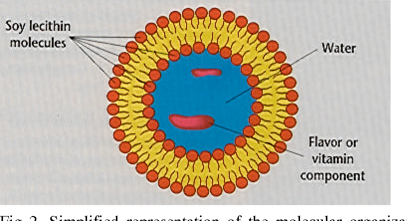 Fig 2. Simplified representation of the molecular organization of a liposome microcapsule in water.