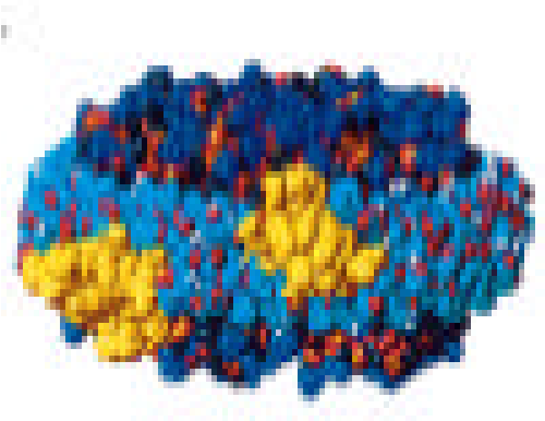 Fig 9a. Detailed Belt model displayed as a helical ribbon. C(NH2)3, blue, oxygen atom, red; phosphorous atom, yellow all other atom, black. ( Source: Borhani 1997)