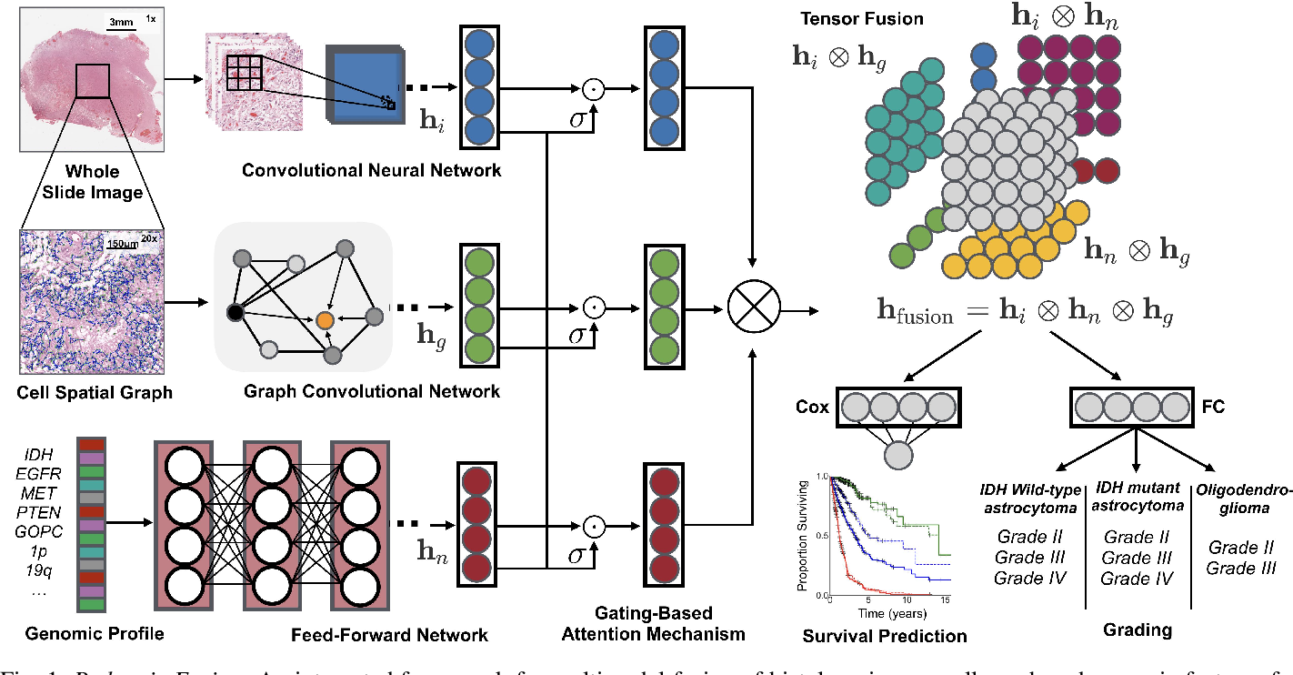 Figure 1 for Pathomic Fusion: An Integrated Framework for Fusing Histopathology and Genomic Features for Cancer Diagnosis and Prognosis