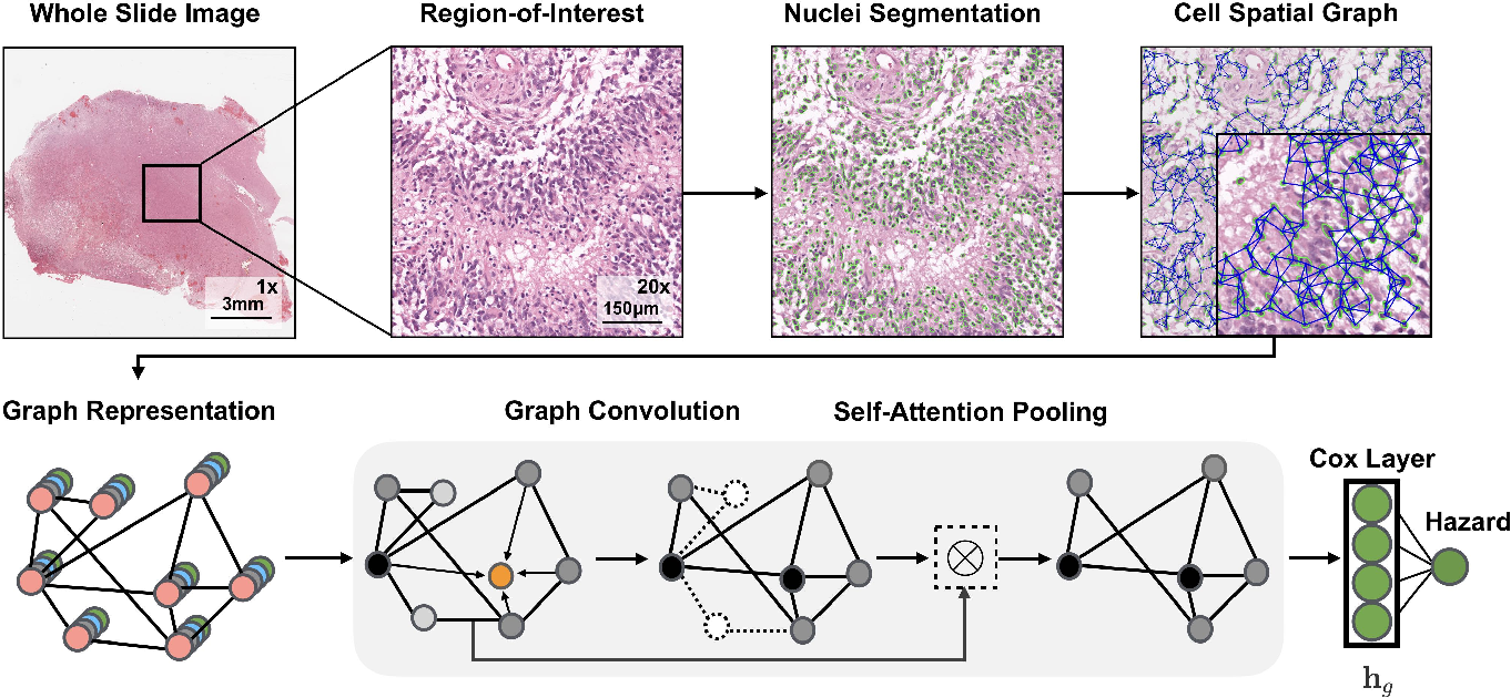 Figure 2 for Pathomic Fusion: An Integrated Framework for Fusing Histopathology and Genomic Features for Cancer Diagnosis and Prognosis