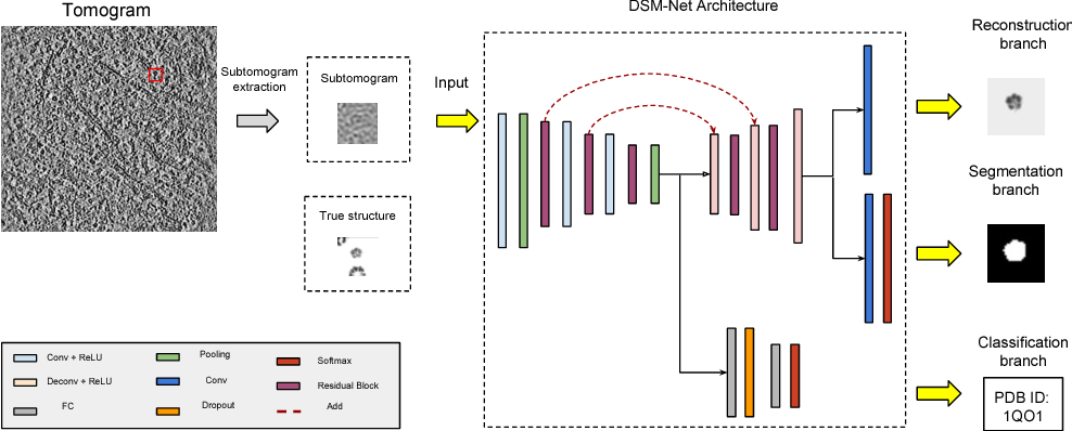 Figure 1 for Multi-task Learning for Macromolecule Classification, Segmentation and Coarse Structural Recovery in Cryo-Tomography