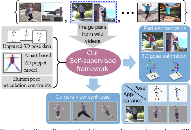 Figure 1 for Self-Supervised 3D Human Pose Estimation via Part Guided Novel Image Synthesis