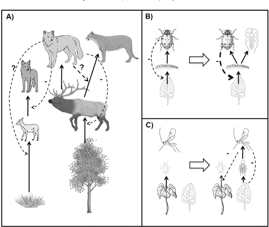 Arewolves justwaspswith teeth what invertebrates can teach us figure 3 ccuart Choice Image