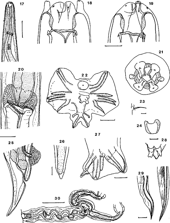 figure 17–30