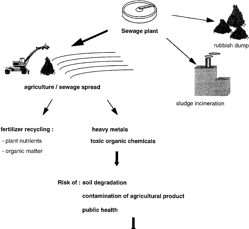 Monitoring species of arbuscular mycorrhizal fungi in planta