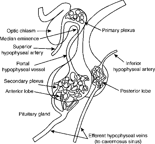 Figure 5 from Pituitary anatomy and physiology. - Semantic Scholar