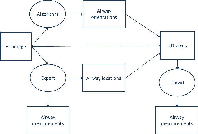 Figure 1 for Early Experiences with Crowdsourcing Airway Annotations in Chest CT