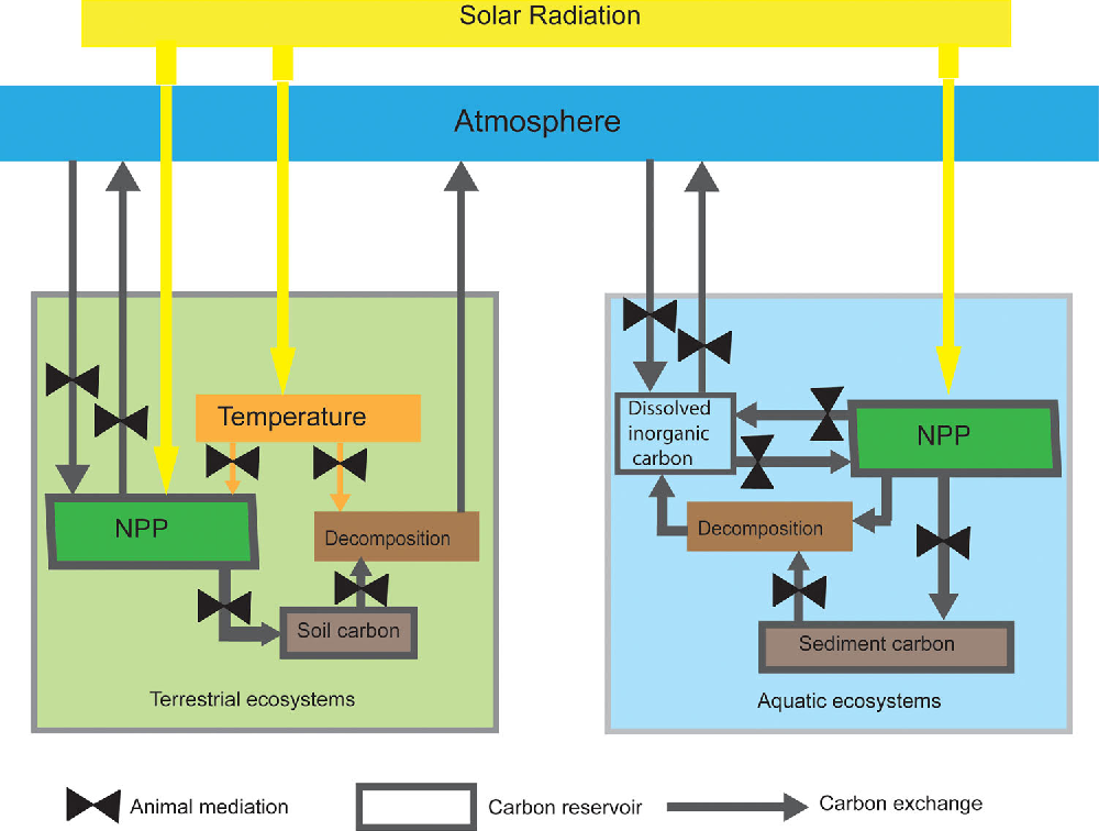 Animating the carbon cycle semantic scholar figure 1 ccuart Choice Image