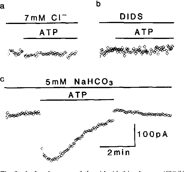 Fig. 5a, b. Involvement of the chloride/bicarbonate (C1-/HCOg) exchanger. Effect of 10 IxM ATP on the holding current in the presence of a 7 mM external CI-, b 200 I-tM 4,4-diisothiocyanostilbene 2,2-disulphonic acid (DIDS) or e after addition of 5 mM NaHCO3 in the patch electrode. (VH = -70 mV)