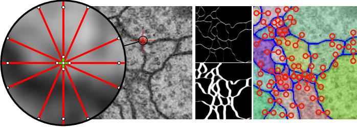 Figure 1 for The Mutex Watershed and its Objective: Efficient, Parameter-Free Image Partitioning