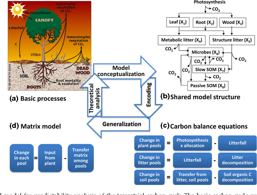 Figure 2 from op in ion predictability of the terrestrial carbon 2 a generalized model for predictability analysis of the terrestrial carbon cycle the basic ccuart Gallery