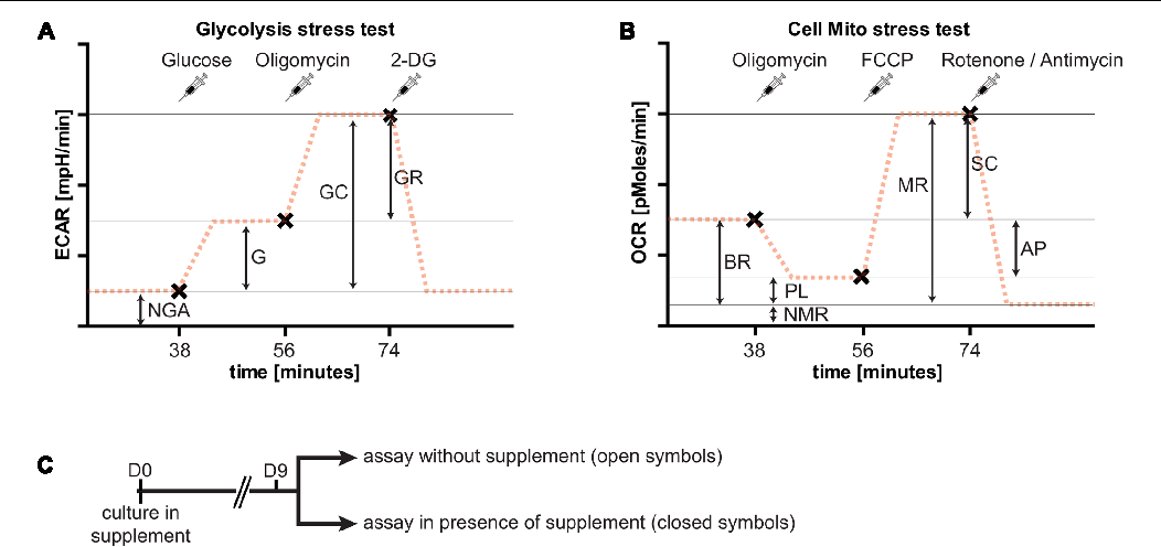 Figure 3 from Neuronal Culture Microenvironments Determine