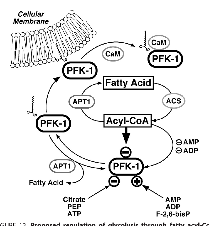 Figure 13 From Reversible High Affinity Inhibition Of