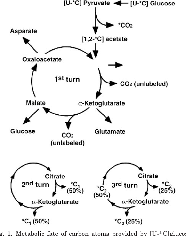 Breath 13 Co 2 Recovery From An Oral Glucose Load During