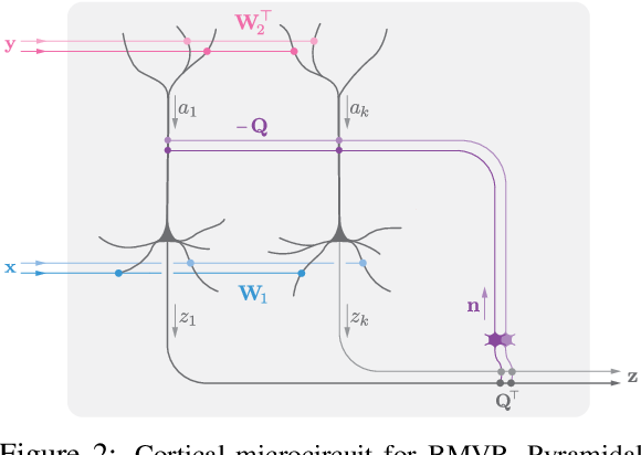 Figure 3 for A biologically plausible neural network for local supervision in cortical microcircuits