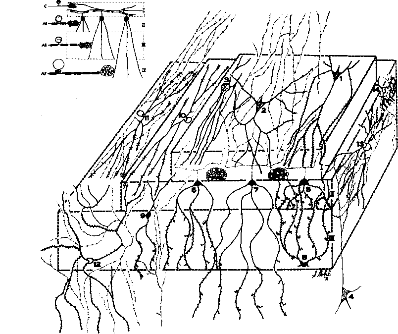 Figure 5 5 From Sensory Mechanisms Of The Spinal Cord