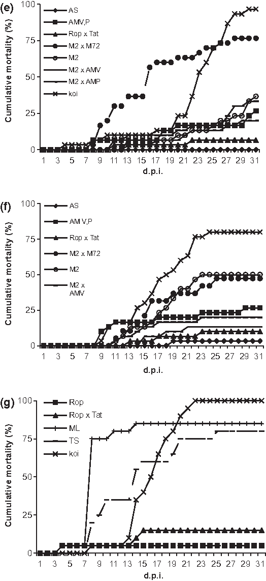 Figure 2 Challenge tests e–g: naı̈ve fish were challenged with CyHV-3 (KHV) by immersion for 2 h and held at 24 °C. Koi carp were used as the positive control. Cumulative mortality was observed for 30 dpi.