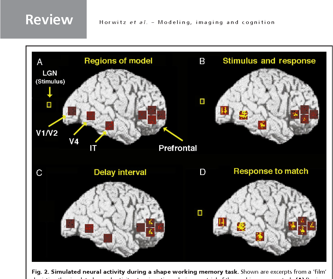 Figure 2 from Neural modeling, functional brain imaging, and