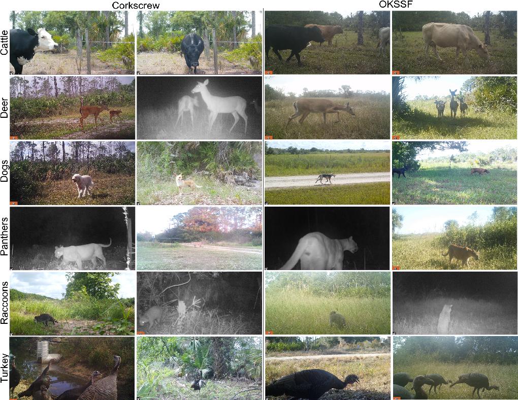 Figure 2 for Florida Wildlife Camera Trap Dataset