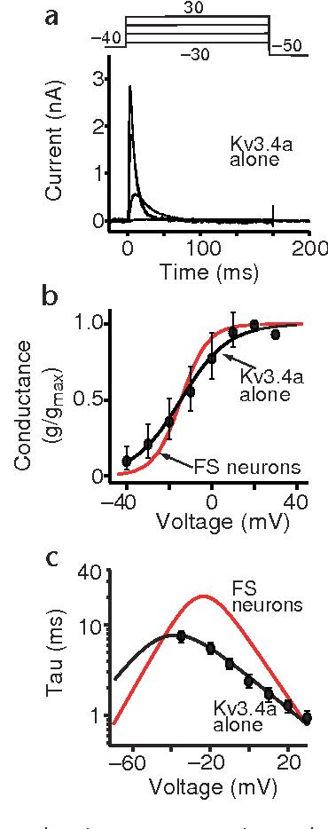 Figure 3 from Kv3 4 subunits enhance the repolarizing