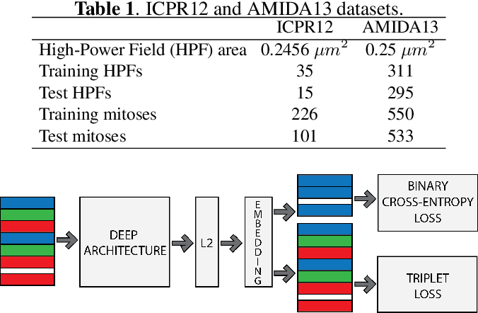 Figure 1 for Mitosis Detection Under Limited Annotation: A Joint Learning Approach