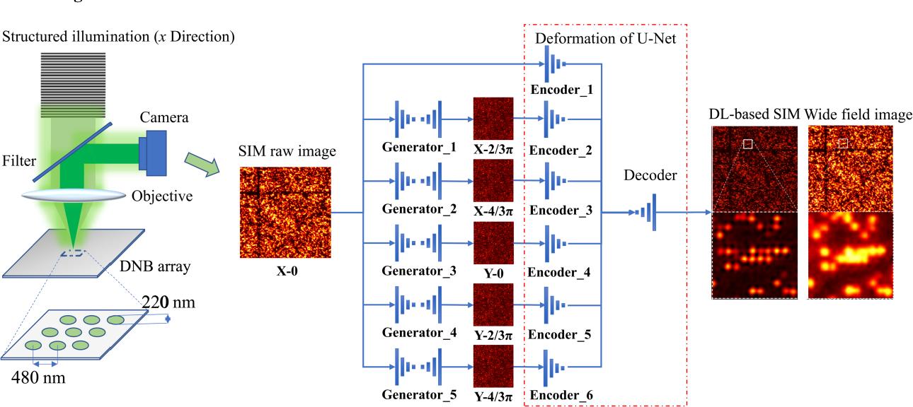 Figure 1 for Single-shot structured illumination microscopy