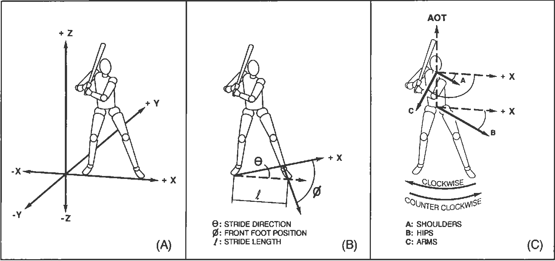 Figure 2 from Hitting a baseball: a biomechanical description ...