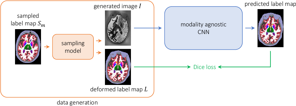 Figure 1 for A Learning Strategy for Contrast-agnostic MRI Segmentation