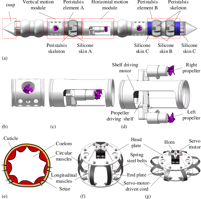 Figure 1 for An Earthworm-Inspired Multi-Mode Underwater Locomotion Robot: Design, Modeling, and Experiments