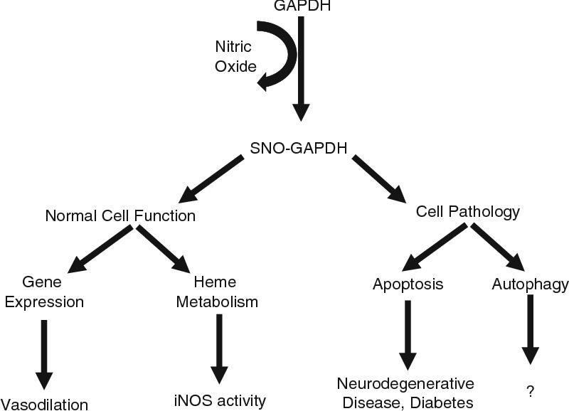 studies on alzheimer s disease mecocci patrizia pratic domenico