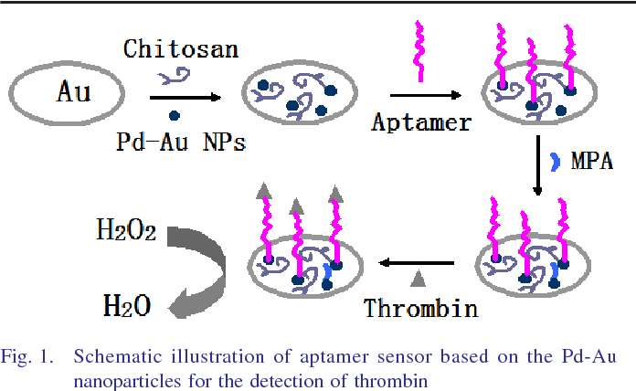 Fig. 1. Schematic illustration of aptamer sensor based on the Pd-Au nanoparticles for the detection of thrombin