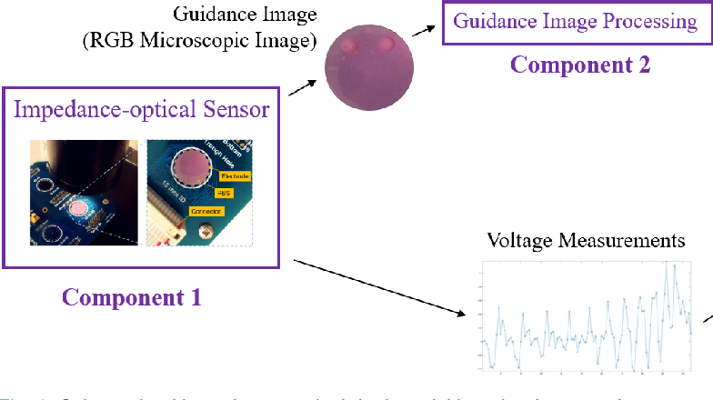 Figure 3 for Impedance-optical Dual-modal Cell Culture Imaging with Learning-based Information Fusion