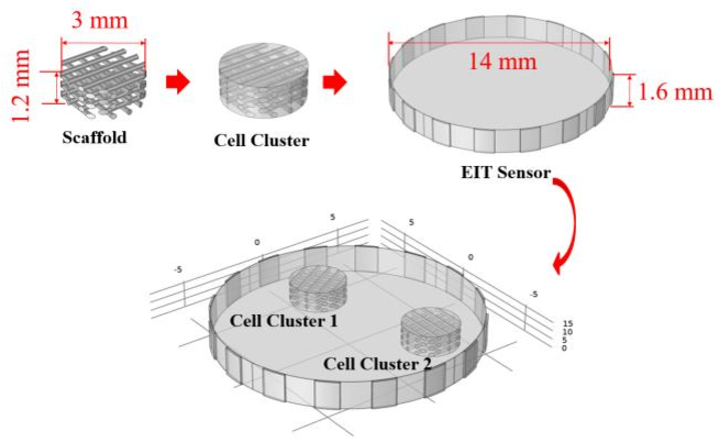 Figure 2 for Impedance-optical Dual-modal Cell Culture Imaging with Learning-based Information Fusion