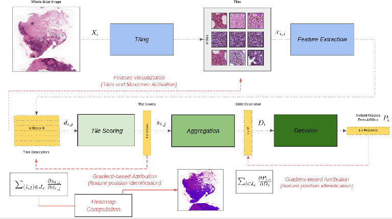 Figure 1 for Improving Interpretability for Computer-aided Diagnosis tools on Whole Slide Imaging with Multiple Instance Learning and Gradient-based Explanations