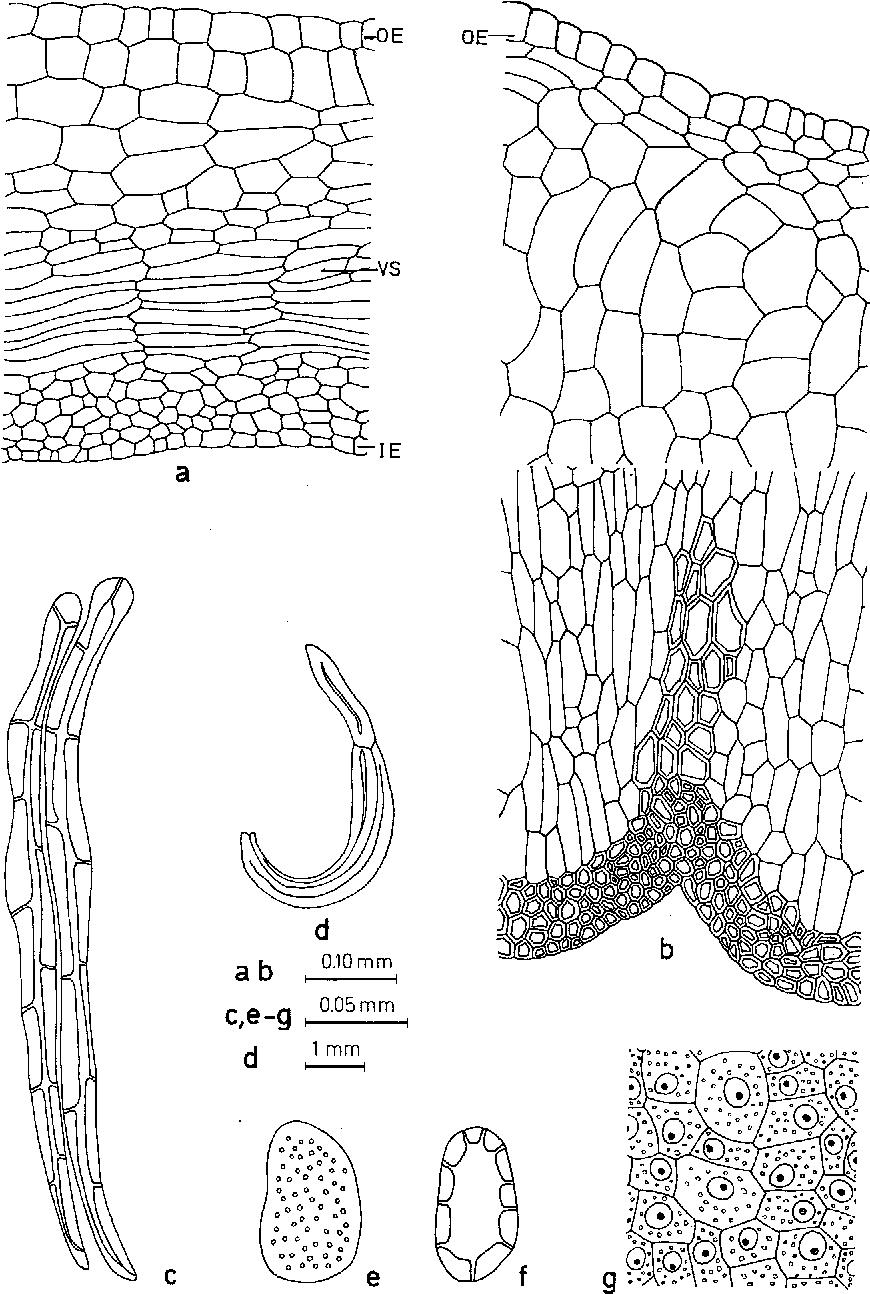Seed and fruit anatomy ofCocculus hirsutus (Menispermaceae ...