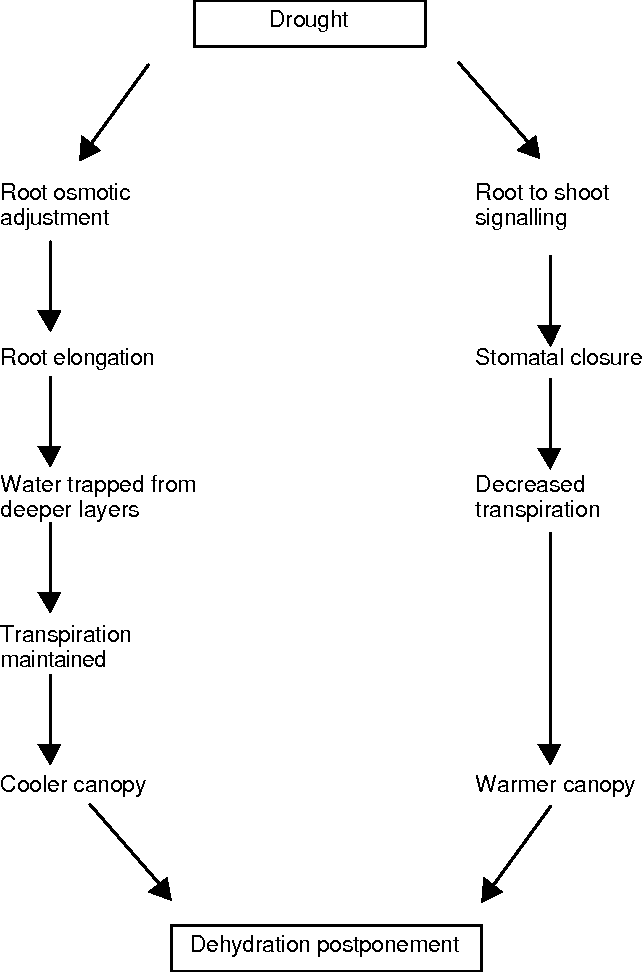 Figure 4 From Should Plants Keep Their Canopy Cool Or Allow