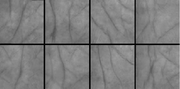 Figure 1 for Palm-GAN: Generating Realistic Palmprint Images Using Total-Variation Regularized GAN