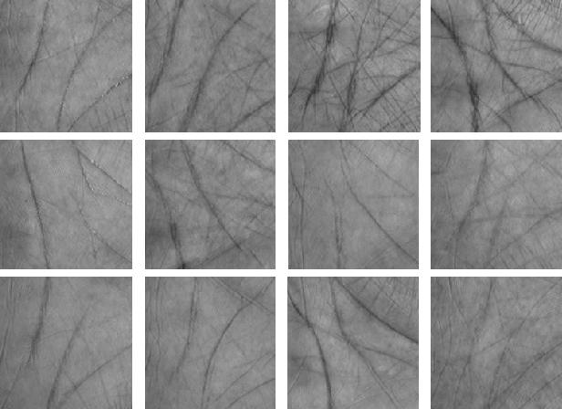 Figure 4 for Palm-GAN: Generating Realistic Palmprint Images Using Total-Variation Regularized GAN