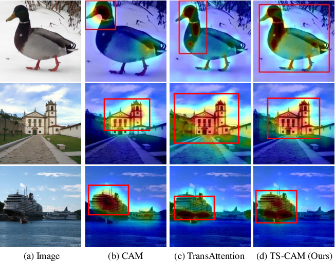 Figure 1 for TS-CAM: Token Semantic Coupled Attention Map for Weakly Supervised Object Localization