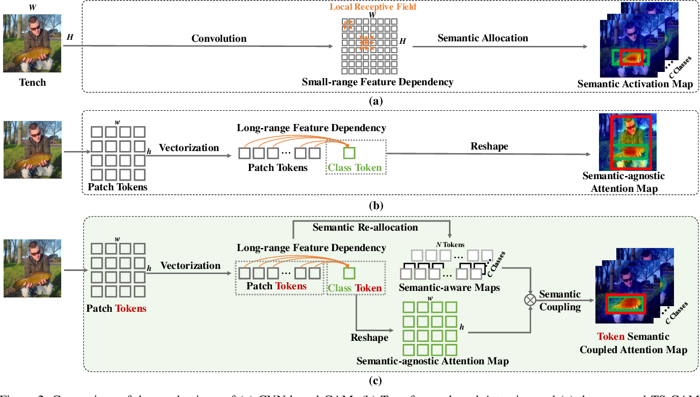 Figure 3 for TS-CAM: Token Semantic Coupled Attention Map for Weakly Supervised Object Localization