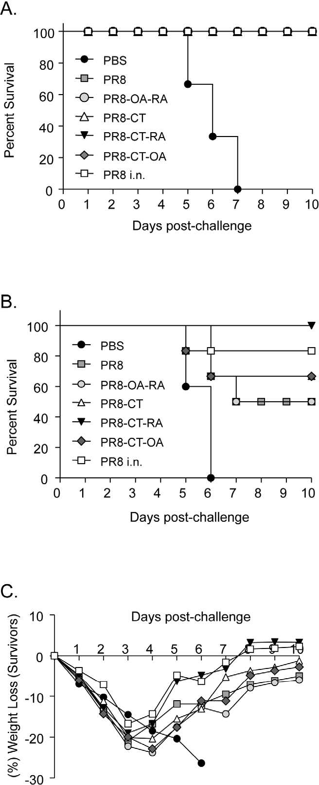 Figure 3. Protection of mice from lethal influenza virus challenge. Survival rates of immunized mice were monitored for 10 days after i.n. infection with mouse adapted PR8 virus. (A) Kaplan-Meier curve showing the percent of mice that survived a 5x LD50 PR8 virus challenge. (B) Percent of mice that survived a 20x LD50 PR8 virus challenge. (C) Percentage of body weight after i.n. challenge with 20x LD50 PR8 virus. PBS, PR8, PR8-OA-RA, PR8-CT, PR8-CT-OA, and PR8-CTRA groups are as described in the legend of Table 1. Data represent the average of six mice per group for each challenge study. doi:10.1371/journal.pone.0010897.g003
