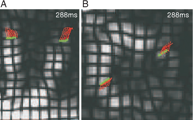 Fig. 8. End-systolic zoomed images of (A) LA slice 5 and (B) SA plane G. Red traces represent the 2-D tracks of a group of gridpoints lying within the myocardium. Green dots represent the position of the points at the endsystolic time frame.