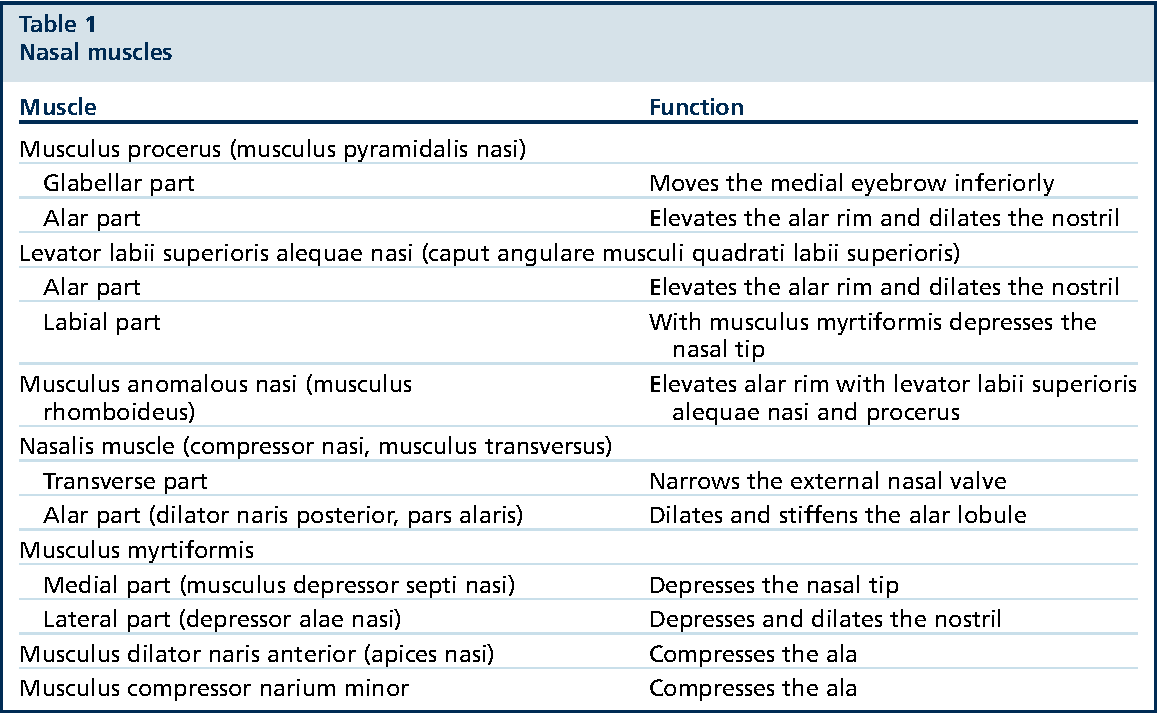 Figure 7 from The External Nasal Valve. - Semantic Scholar
