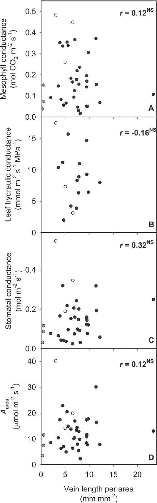 Fig. 3. Independence of (A) mesophyll conductance, (B) leaf hydraulic conductance, (C) stomatal conductance, and