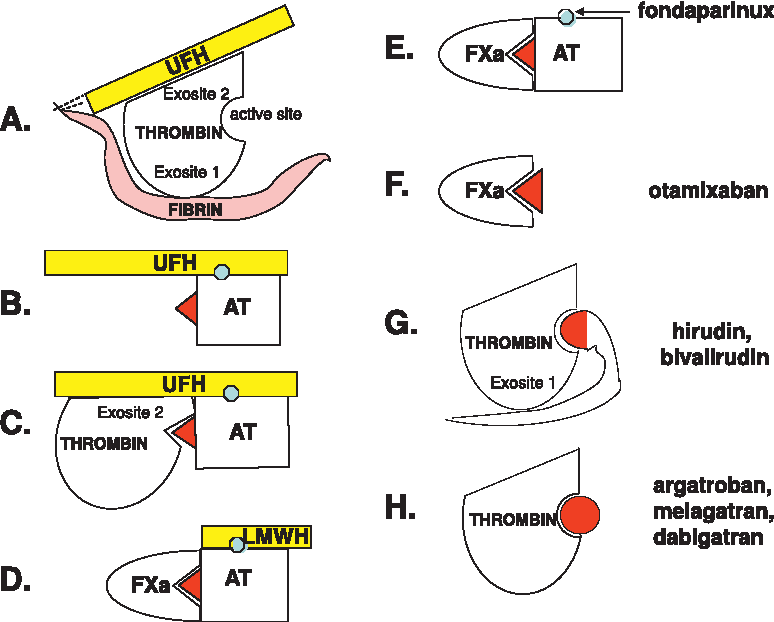 Figure 3: Mechanisms of action of the different thrombin inhibitors.