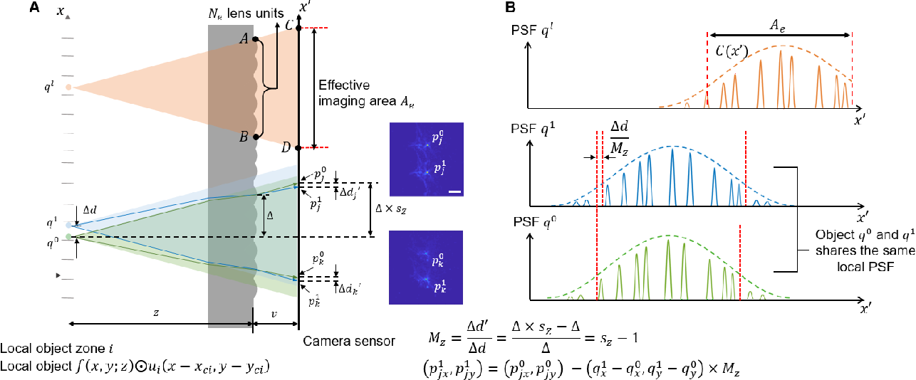 Figure 3 for GEOMScope: Large Field-of-view 3D Lensless Microscopy with Low Computational Complexity