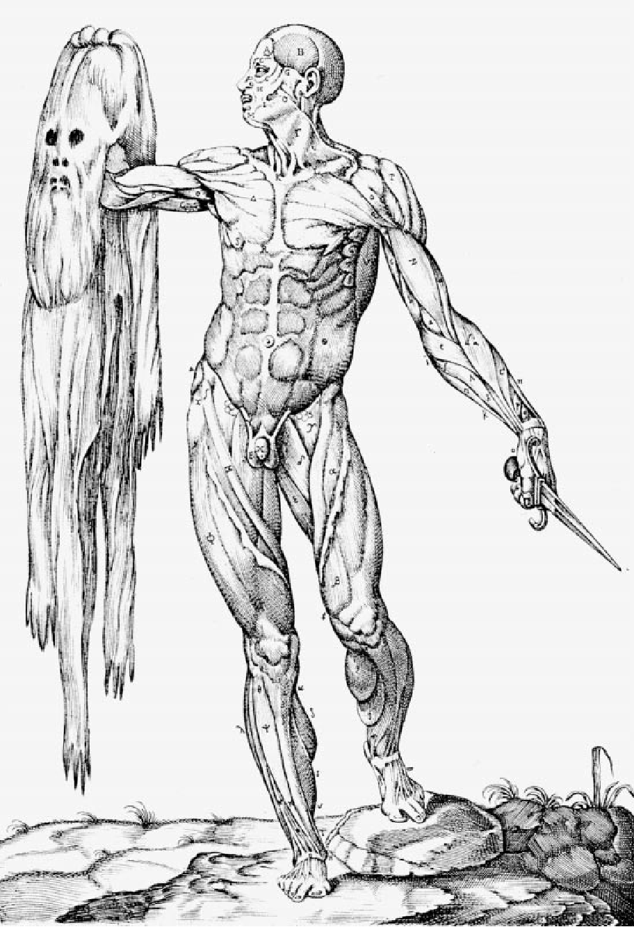 Figure 3 from Michelangelo: art, anatomy, and the kidney. - Semantic ...
