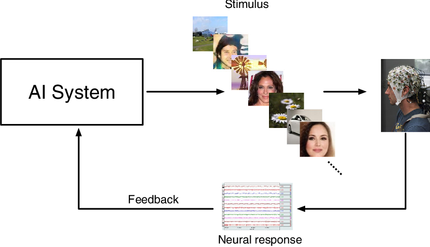 Figure 1 for Use of Neural Signals to Evaluate the Quality of Generative Adversarial Network Performance in Facial Image Generation