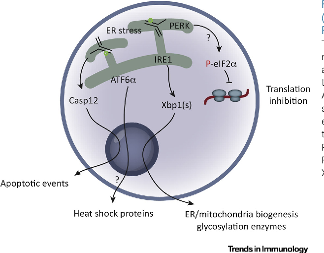 Metabolic links between plasma cell survival secretion and stress figure 2 publicscrutiny Gallery